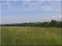 TQ5690 : Tylers Common, Upminster, Essex by John Winfield