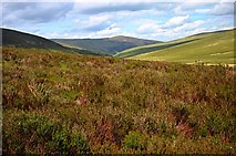 NY3031 : The heather hillside of Snab by Toby Speight
