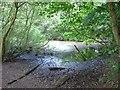 TQ2030 : Stew Pond, adjacent to bridleway, St Leonards Park Estate, Near Horsham, West Sussex. by Pete Chapman