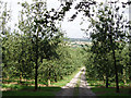 SW7750 : Old cider apple orchard by Sheila Russell