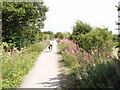 SP7803 : Cycle track, formerly railway, Princes Risborough to Thame by David Hawgood