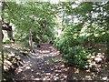 SU9485 : Hartley Court Moat (Hardicanutes), Burnham Beeches by David Hawgood