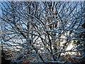 SJ5267 : Morning  sun on snow at Kelsall by Jack Hill