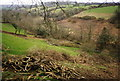 SX0882 : Valley near Camelford by Martin Bodman