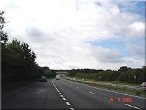 SJ3163 : A55 Dobbs Hill by Dot Potter