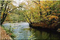 SX5259 : Plymouth: The Plym in Bickleigh Vale by Martin Bodman