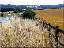 SU4573 : Verge and Farmland near North Heath by Pam Brophy