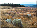 SE1142 : Cup marked rock, Bingley Moor by David Spencer