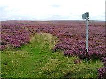 SE6092 : Public Footpath to Cinderhill Wath by Mick Garratt