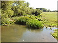 SP7108 : River Thame at Notley by David Hawgood