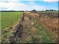 SE0943 : Grass Road near West Morton by David Spencer