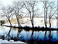 H4772 : Reflections in winter by Kenneth  Allen