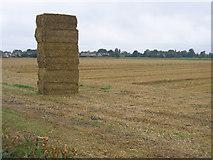 TF2005 : Temporary monument to farming, Newborough, Peterborough by Rodney Burton