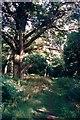 SP3317 : Path in Wychwood by SA Mathieson