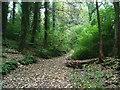 SX5151 : Staddiscombe Woods by Gwyn Jones