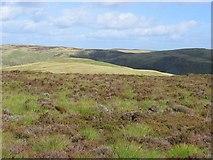 NN9306 : Moorland above Glen Eagles. by Richard Webb