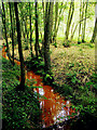 SU4461 : Stream in Clere Wood by Pam Brophy