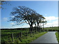 NS6251 : Wind Swept Trees Near East Kilbride by Iain Thompson