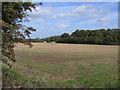TL0834 : Buckle Grove, Silsoe, Beds by Rodney Burton