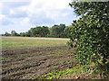 TL1034 : Farmland SE of Lower Gravenhurst, Beds by Rodney Burton
