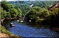 SX4272 : River Tamar,  Clitters Wood, Gunnislake 1978 by Crispin Purdye