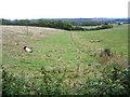 TL0939 : Longhorns taking a rest beside the Greensand Ridge Walk, Clophill, Beds by Rodney Burton