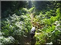 SJ5273 : Forestry Track Leading to Crossley Hospital East by David Crocker