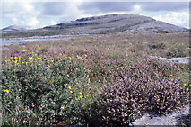 R3294 : Mullach Mor and Sliabh Rua: Burren National Park by Dr Charles Nelson