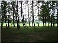 SU7579 : Fir Trees & Pasture by Colin Bates