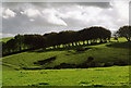 SX1984 : St Clether: line of trees by Martin Bodman