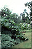 """V7162 : Rossdohan; Gunnera (""""giant rhubarb"""") and the house ruin. by Dr Charles Nelson"""