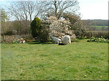 TQ5618 : Garden, Near Horam, E Sussex by Rosemary Nelson
