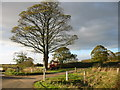 SE8541 : Tree, Harvester and Storm Cloud by Colin Westley