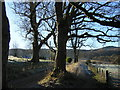NS5281 : West Highland Way Near Dumgoyach by Iain Thompson