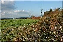 SW9652 : Crop Field by Tony Atkin