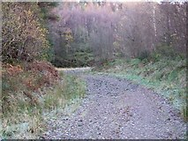 NS1490 : Forestry Road by william craig