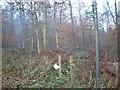 SU8086 : The Chiltern Way through Heath Wood by Colin Bates