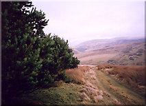 NT0129 : The plantation on Cowgill Rig by bill copland