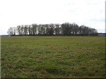 TF0801 : Crow Spinney, Southorpe, Peterborough by Rodney Burton
