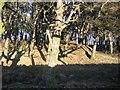 NY0320 : Tutehill Wood Northern end. by John Holmes