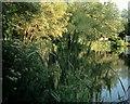 TG1821 : Hevingham Lake by Steve Rigg