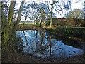SU8097 : Pond, Bledlow Ridge by David Ellis
