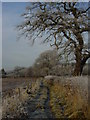SJ8174 : Winter morning on the path which runs NW to Heath Farm by Colin Park