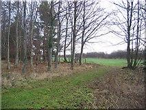 NT6377 : Woodland, Hedderwick Hill. by Richard Webb