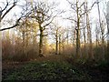 TL6042 : Langley Wood by David Gruar