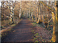 SP0385 : The Harborne Walkway by Phil Champion