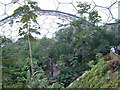 SX0455 : Humid Tropics Biome, Eden Project by Nigel Homer