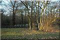 SE2804 : Through the trees to Blacker Dam by Chris Yeates