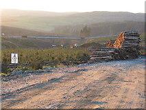 NR7227 : Felled trees stockpiled on forestry road near Lussa pipeline, Kintyre. by Johnny Durnan