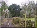 SD4878 : Dollywood Lane by Bob Jenkins